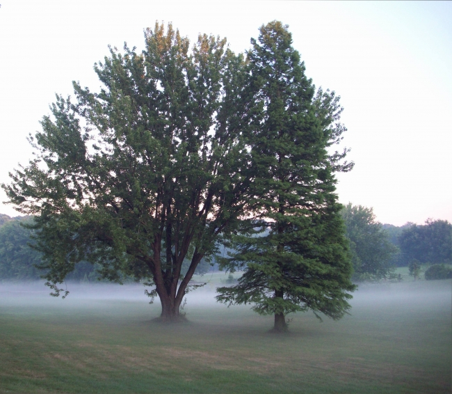 Cropped-tree-with-fog-copy-e1373298763873
